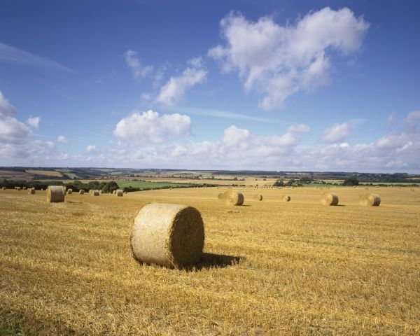 Cotswold Harvest. Harvest time in the cotswolds near Northleach GloucestershireGLOCESTERSHIRE