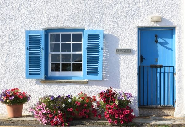 A cottage in the cornish seaside village of St Mawes, with a fine display of flowers and its white washed walls blue door window and shutters,.on a summers day