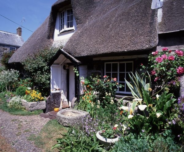 THE LIZARD. CADGWITH ON THE LIZARD CORNWALL ON A SUMMERS A COTTAGE WITH ITS FINE GARDEN