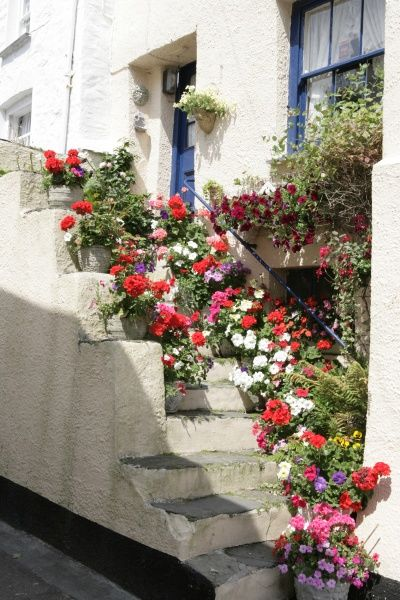 Polperro Cornwall. Flowers out a cottage in the cornish fishing village of Polperro