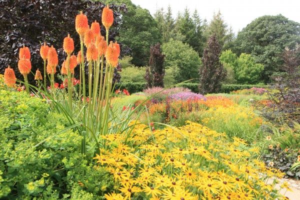 The Vibrant hot colours in one of the gardens at Rosemoor in North Devon near Great Torrington on a day in August