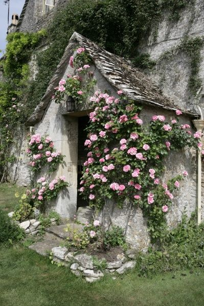 Roses around a door way of an old Farmhouse in the cotswold hamlet of Calmsden near Cirencester